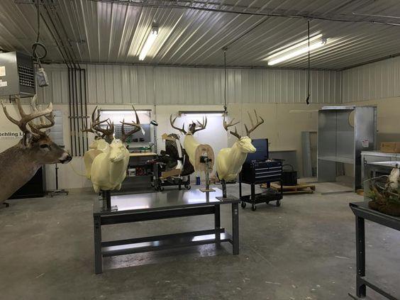 Custom Eeer Taxidermy Mounts In Wisconsin Over 6000 Sq Ft Deer Taxidermy Facility Located Between Madison Janesvil Taxidermy Taxidermy Mounts Taxidermy Decor