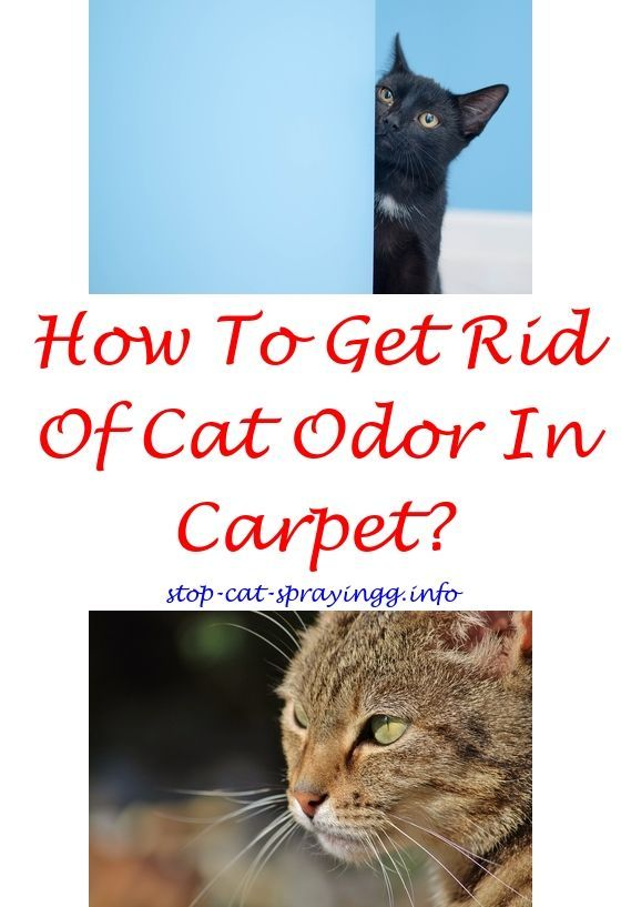 Catpee Homemade Cat Repellent Spray For Furniture Why Does My