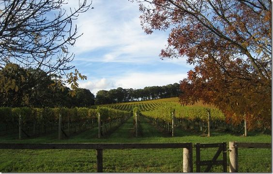Wedding Reception <3 Centennial Vineyards, Bowral, Southern Highlands, New South Wales.