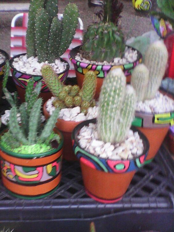 Cactus el viejito