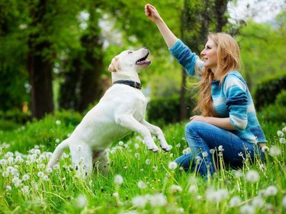 Hundeerziehung: Bleiben Sie konsequent – Foto: Shutterstock / Alena Ozerova    www.einfachtierisch.de