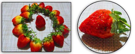 Fresas y Sus Propiedades Medicinales y Curativas