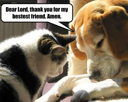 dear lord for stupid people   Very Funny Pics - Animals - funny-dog-pictures-dear-lord