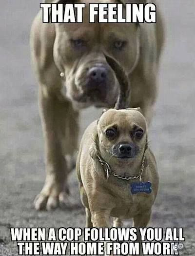 Funniest Animal Animal Memes Funny Dog Memes Cute Animals With Funny Captions Funny Dog Captions