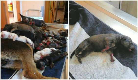Mother Dog And her Puppies Get Put Down After Woman Pours Boiling Water On Them! Demand A Harsh Penalty!   PetitionHub.org