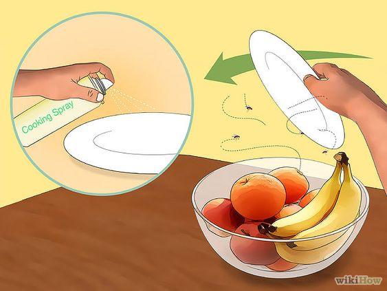 Mouches à fruits LES DROSOPHILES