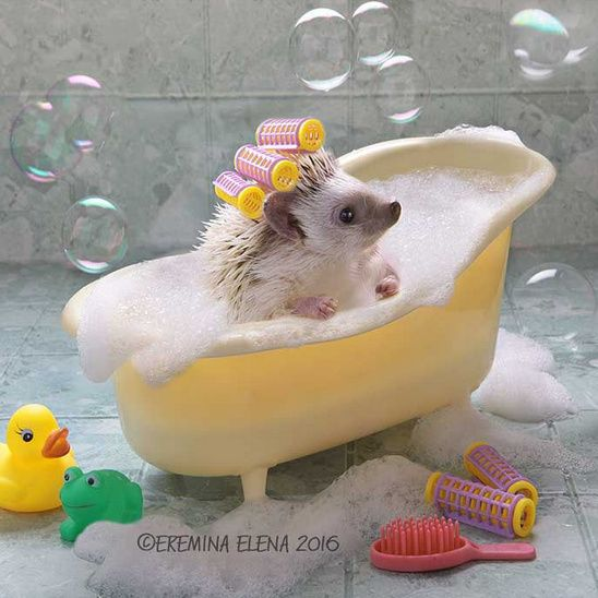 'Can I stay and play in the Bath for 10 more minutes Mum?' - Hedgehog by Elena Eremina: