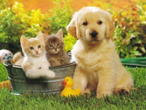 バケツに入ったネコとかわいいゴールデンレトリバーの壁紙