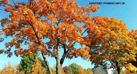 Herbstquiz – Knackst du als Erster diese 15 harten Nüsse?