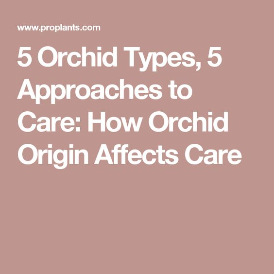 5 Orchid Types, 5 Approaches to Care: How Orchid Origin Affects Care