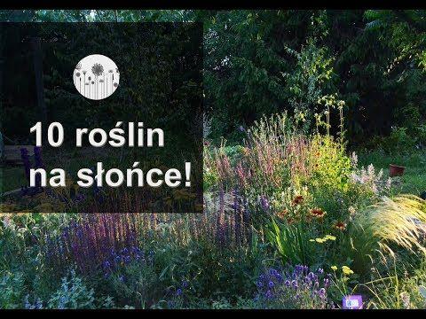 10 Roslin Na Slonce Jakie Kwiaty Posadzic Na Slonecznym Stanowisku Youtube Lettering 10 Things Letter Board