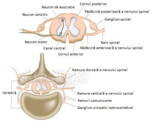 Contact | Spitalul Clinic Dr. I. Cantacuzino -