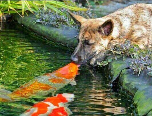 La #Amistad entre los #Animales si existe.