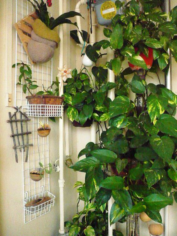 How to grow a money plant indoors this plant is great for an indoor plant only needs a tiny - Good indoor plant ...