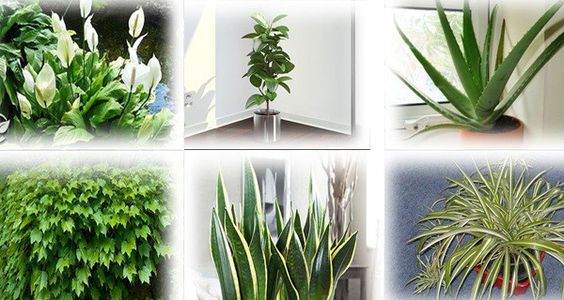 These Plants Are Oxygen Bombs – Have At Least One Of Them To Clean The Air At Your Home - The House of Health