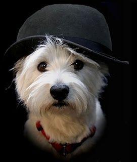 Le chapeau: