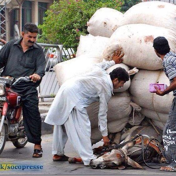 !Hasta dónde llega la explotación d los animales! Si sientes indignación como yo dale RT q el mensaje llegue a India http://pic.twitter.com/KiNI1nUqxk Maria Celeste
