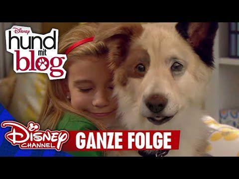 Hund Mit Blog Die Erste Folge In Voller Lange Disney Channel App Youtube Hund Mit Blog Disney Channel Blog