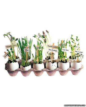 small flowerpots