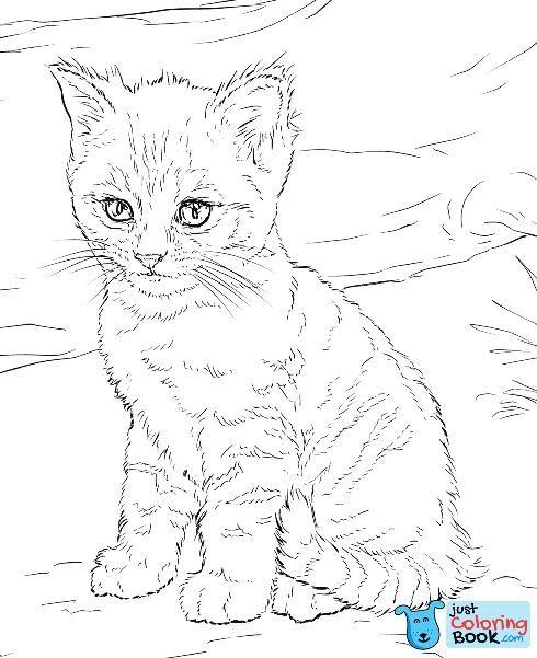 Free Printable Cat Watching Himself In A Puddle Coloring Pages Sketsa Gambar Kucing
