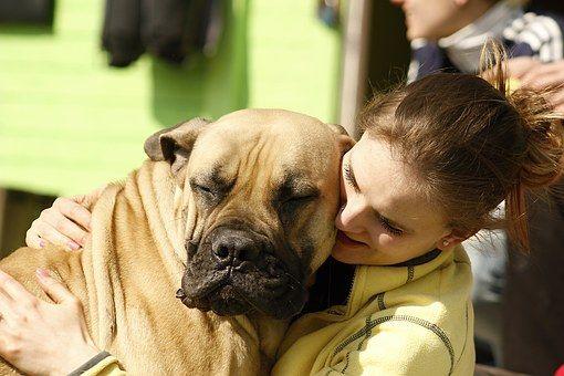 Dog, Girl, Bordeaux, Mastiffs, Mastiff