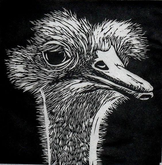 Ostrich linocut by rowanne anderson http