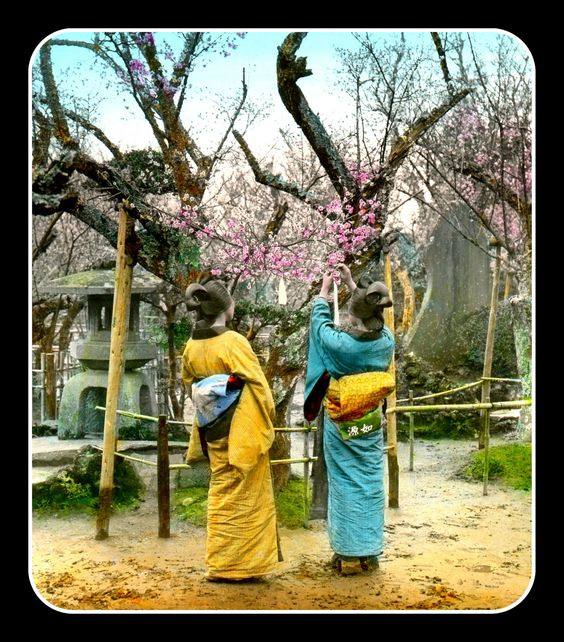 https://flic.kr/p/nnLZgZ | SHOW ME THE OBI !!! -- Poems, Dreams, and Plum Blossoms in OLD JAPAN | With the exception of images depicting children, photographer T. ENAMI rarely had his subjects look at the camera. This 110-year-old, hand-colored photograph is no exception.  It was originally shot in 3-D, and I've based this Flickr version on an old lantern-slide made from the 3-D negative :  S 306 - Plum Blossoms at Kabata Park. One is tying a Poem Card to a Branch. II.  The Roman numeral &qu...: