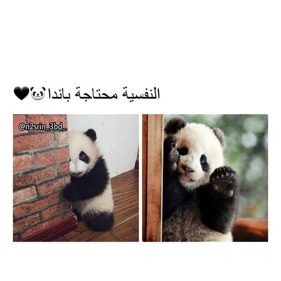 ي والله Cute Quotes Funny Arabic Quotes Friends Quotes