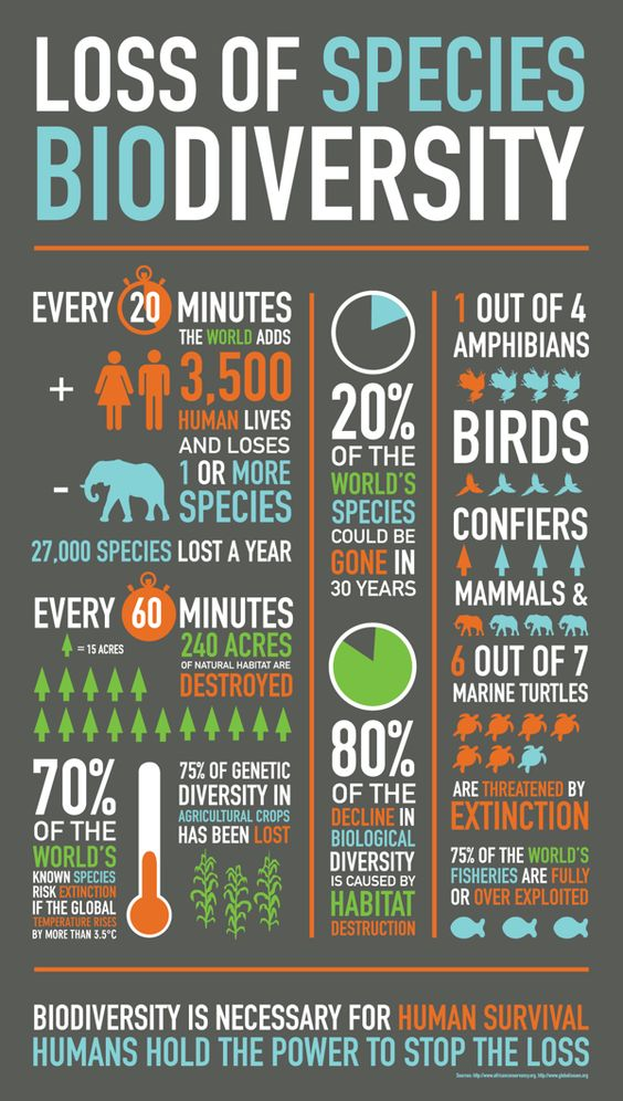 I like how simple this infographic is. It shows some alarming statistics but it ends giving as hope that we can change this scenario.