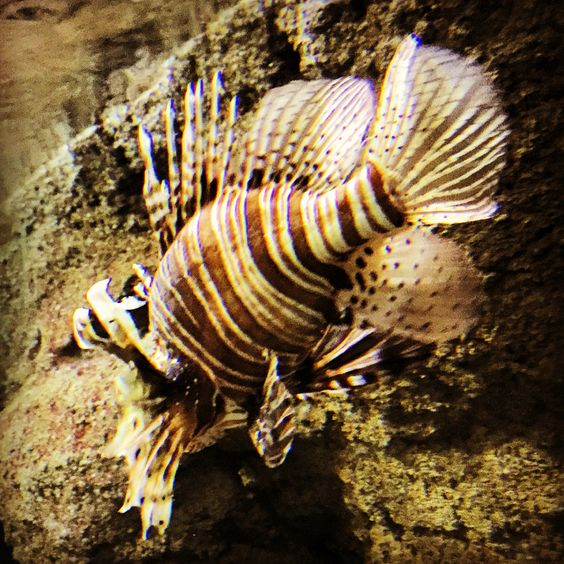 Underwater Ocean Marine Sea Nature Discover Aqua Fish Aquatank Starfire Beach Padi Aquarium Ikelite Cichlids Petfish Myfish Colorful Aquarium