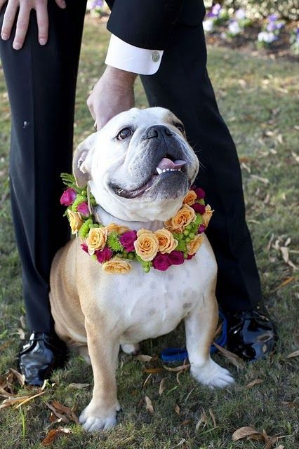 dog in wedding (OMG this is sooo cute)!