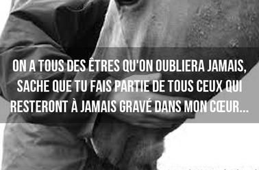 citation equitation