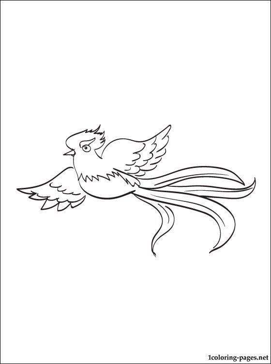 quetzal coloring page to print out coloring pages