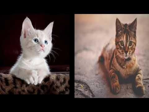 سلسلة تفسير الاحلام حلقة رقم 3 رؤية القطة في المنام عامتا وللمراة المتزوجة و الحامل والبنت Youtube Animals Cats