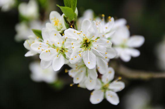 Blütenzauber II. http://fc-foto.de/33520502