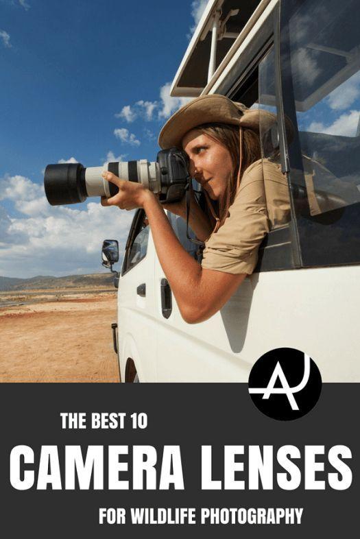 Top 10 Best Lenses For Wildlife Photography Outdoor Photography Tips And Ideas Photo Outdoor Photography Tips Hiking Photography Wildlife Photography Tips
