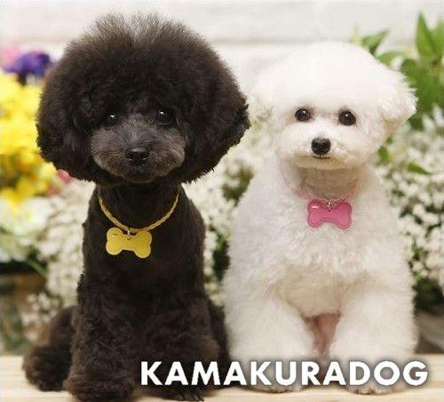可愛い小型犬用アクセサリー通販 鎌倉dog シフォンリボンネックレス 2021 小型犬 犬 ペット用品