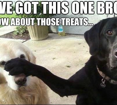 Silly dogs