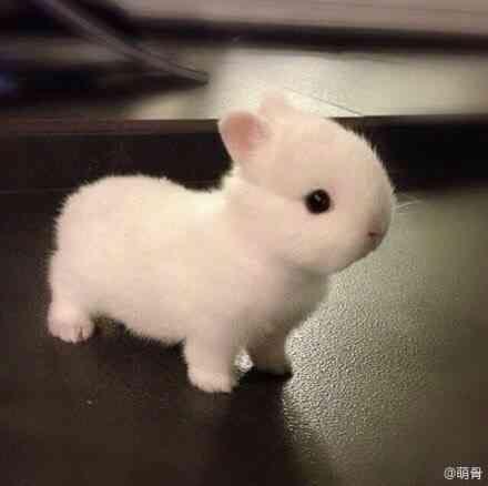 チュウゴクノウサギ 短耳兎 中国に生息するウサギ科の野生動物 夜行性です もちろん生きています ミニウサギ かわいい動物の赤ちゃん 動物
