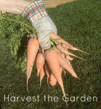Harvest our garden