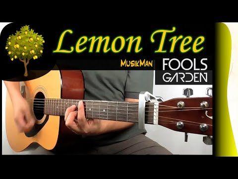 Lemon Tree Fool S Garden Guitar Cover Musikman 131 Youtube The Fool Lemon Tree Guitar