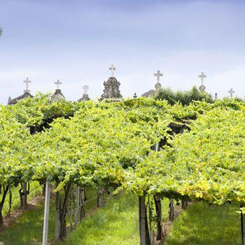I love the green trellises of Albariño vineyards