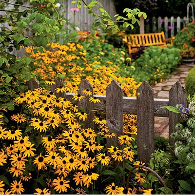Black-eyed Susans planted by most fences aren't solid, so plants don't have to choose one side or the other. Perennials and reseeding annuals can start out on one side, spread by roots or seeds through the pickets, and bloom for you on the other side too. Other good choices include asters, bearded irises, bee balms, daylilies, four o'clocks, goldenrods, mums, phlox, purple coneflowers, Queen Anne's lace, and spider flowers. All these are so pretty growing along  a fence!!