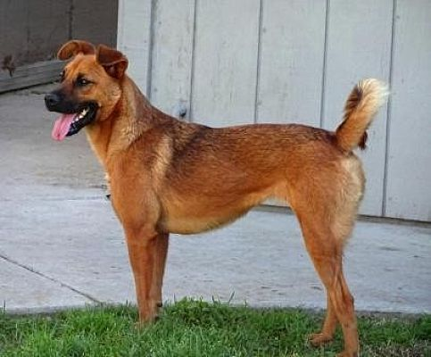 Lathrop Ca Shepherd Unknown Type Meet Doodle A Dog For