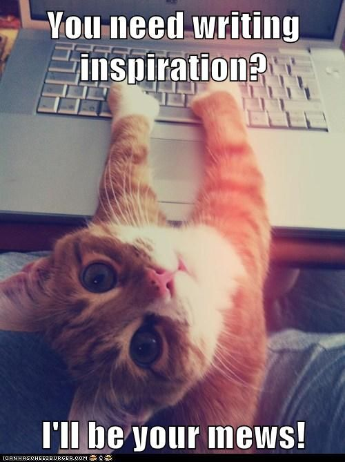 ...I guess you'll do, mews kitteh.