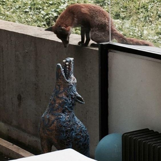 My friendly fox trying to understand art at breakfast this morning.  #fox #bff #joannavasconçelos #wolf