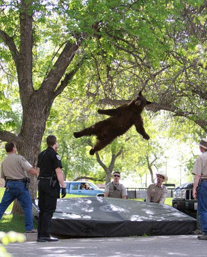 Booboo on a trampoline