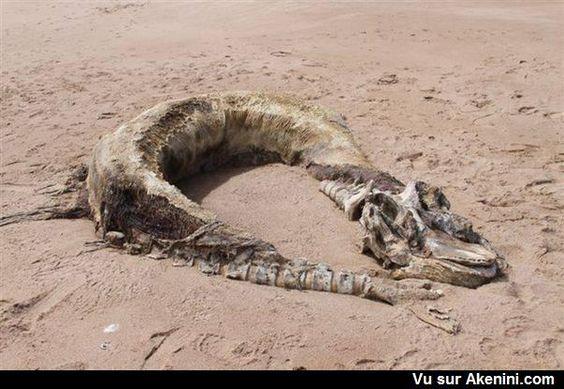 Créature étrange sur la plage de Bridge of Don  #Animaux #Etrange #Bizarre
