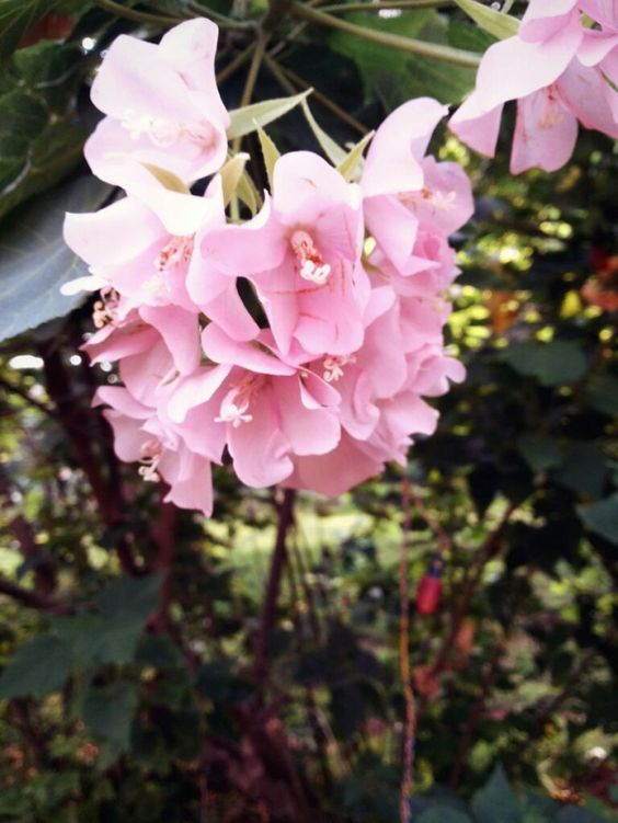 Pretty Pink Flowers #flower #photography #contest