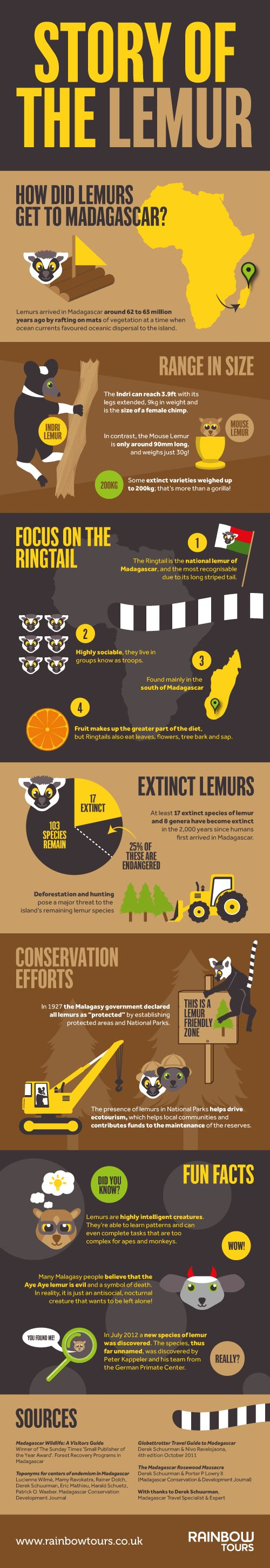 The Story of Lemurs Infographic